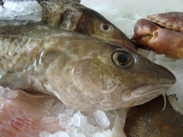 versevis-kabeljauw